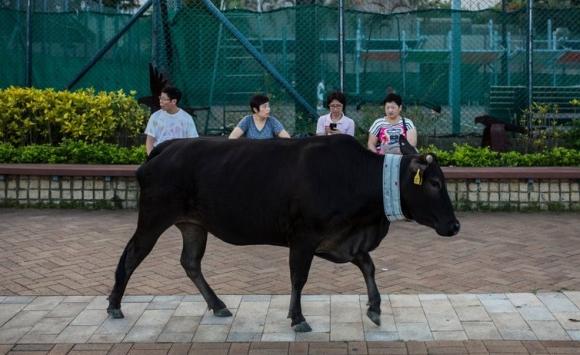 23hongkong-facebookjumbo-v2.jpg