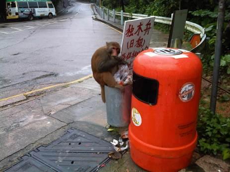 nicola monkey 1