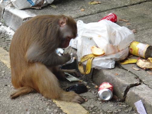 nicola monkey 2