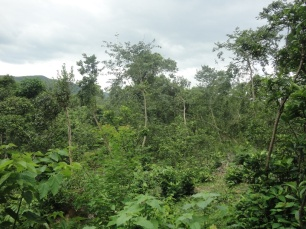 Recovering natural Hong Kong forest