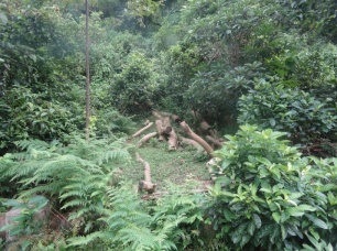 An AFCD Reforest project