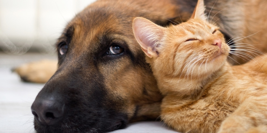 -media-9943-cats-are-better-than-dogs.CACHE-1200x630-crop