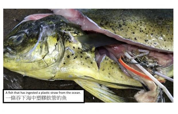 fish pic v3