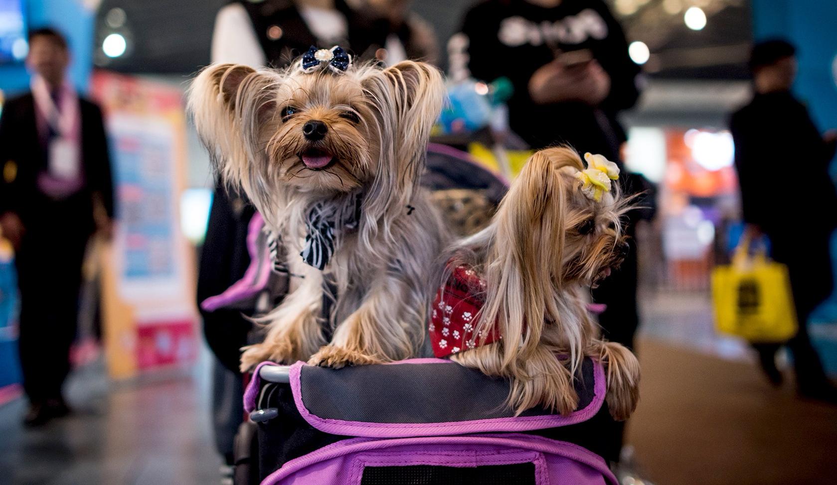 unleashed-dog-strollers.jpg