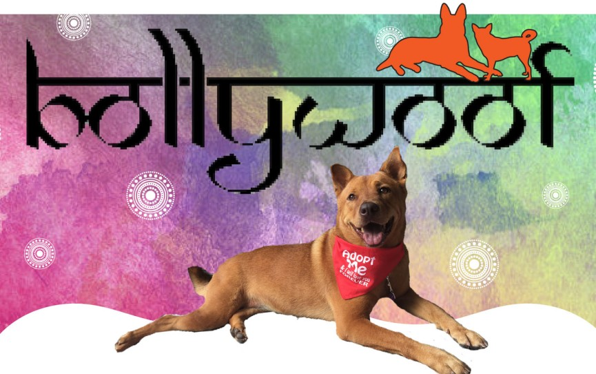 BOLLYWOOF (fb)