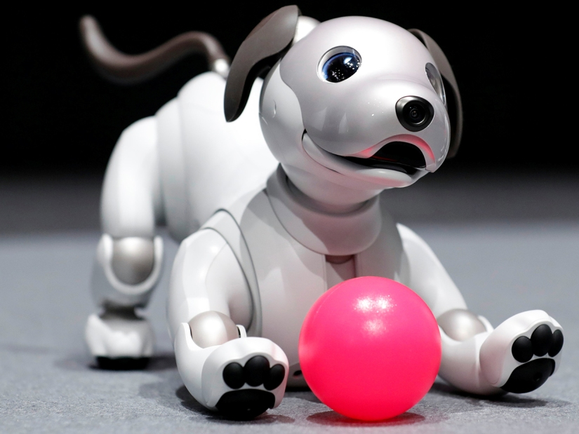 "Sony Corp's entertainment robot ""aibo"" is pictured at its demonstration in Tokyo"