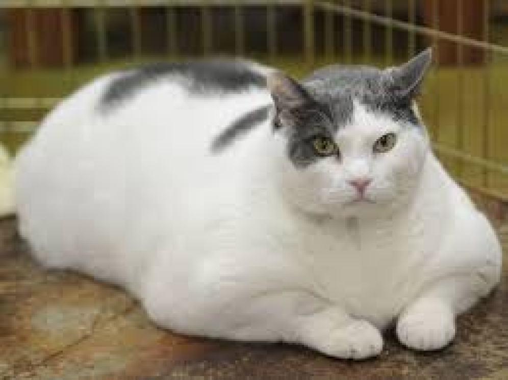 petsworld cat