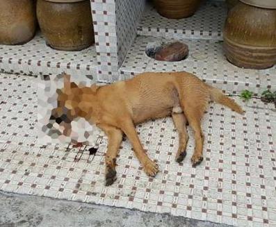 dead dog pak kong